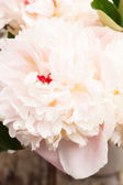 Peonies in vase — Stock Photo