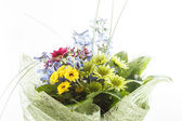 Nice flowers — Stock Photo