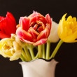 Nice tulips — Stock Photo