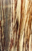 Texture of real wood — Stock Photo