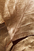 Leaves texture — Stock Photo