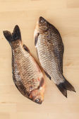 Crucian carp — Stock Photo