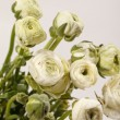 White Ranunculus — Stock Photo #27851005