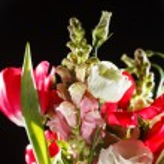 Spring flowers — Stock Photo #28763297