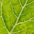 Leaf texture — Stock Photo #28809543