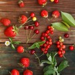 Red berries — Stock Photo #28810513