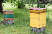 Apiary on a country site — Stock Photo