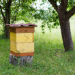 Stock Photo: Apiary on country site