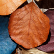 Stock Photo: Color leaves