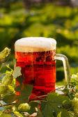Luppolo con birra — Foto Stock