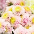 Chrysanthemum — Stock Photo #30789547