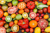 Colorful tomatoes — Photo