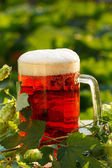 Hops with beer — Стоковое фото