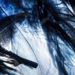 Color feathers — Stock Photo