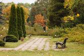 Autumn garden — Stock Photo