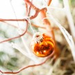 Christmas decoration — Stock Photo #32519709