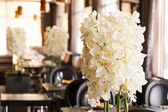 White orchid — Stock Photo