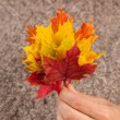 Autumn leaves in human hand — Stock Photo