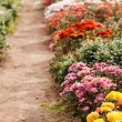 Flowers in the garden — Stock Photo