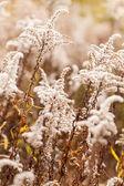 Autumn plants — Stock Photo