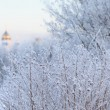 Winter landscape — Stock Photo #34108841