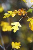 Autumn — Foto de Stock