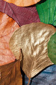 Color leaves — Stock Photo