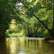 Forest river — Stock Photo #34781803