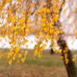 Autumn — Stockfoto #34784321