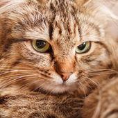 Nice cat — Стоковое фото