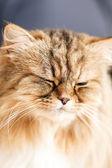Nice cat — Zdjęcie stockowe