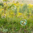 Stock Photo: Soap bubble outdoor