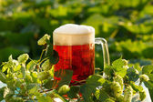 Hops with beer — Stock Photo
