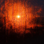 Sunset drops — Stock Photo #35450687
