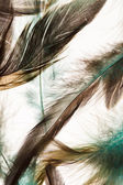 Piume di colore — Foto Stock