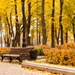 Empty bench in park — Foto Stock