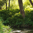 Forest river — Stock Photo #37200159