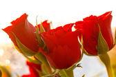 Nice roses — Stock Photo