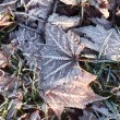 Frozen leaves — Stock Photo #37672599