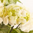 Beautiful hydrangea — Stock Photo #38363159
