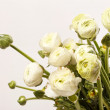 White Ranunculus — Stock Photo #38363315