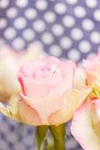 Vacker ros — Stockfoto