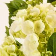 Beautiful hydrangea — Stock Photo #38947943