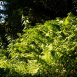 Fern in the forest — Stock Photo #39280319