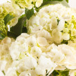 Beautiful hydrangea — Stock Photo #39576123