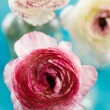 Ranunculus — Stock Photo #39930801