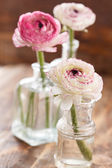 Ranunculus — Stock fotografie