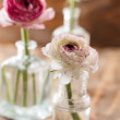 Ranunculus — Stock Photo #39982637