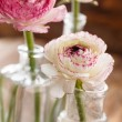Ranunculus — Stock Photo #40110033