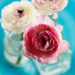 Ranunculus — Stock Photo #40110055